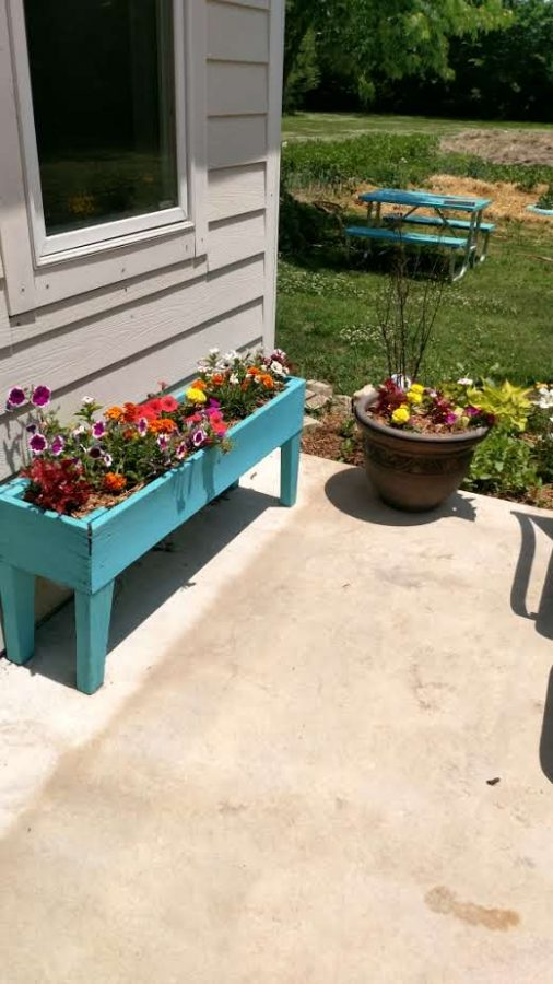 colorful flower planter