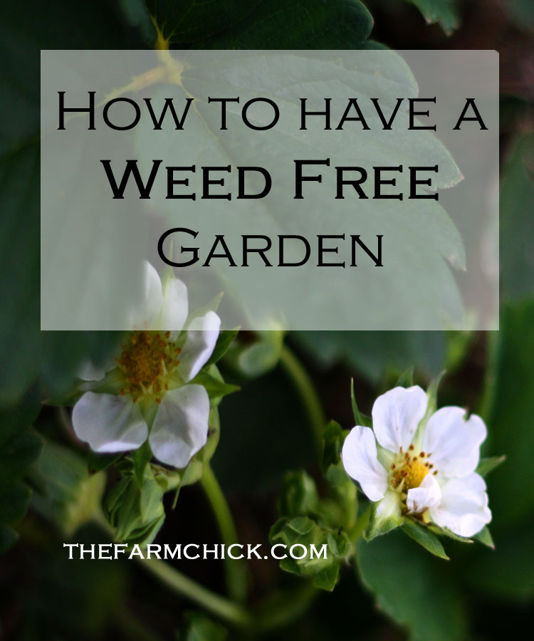 how to have a weed free garden