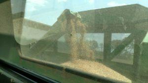kansas wheat harvest