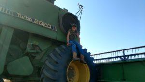 kansas wheat harvest 8820