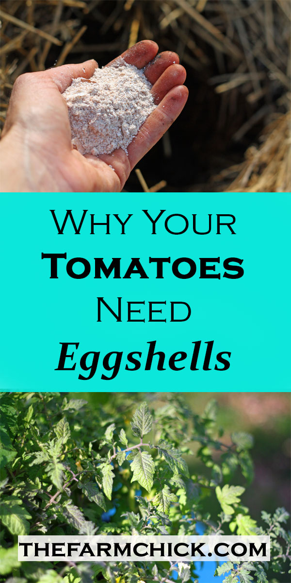 why your tomatoes need eggshells