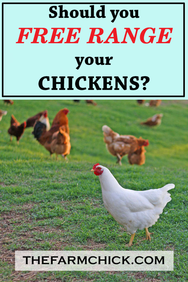 Learn the pros and cons of free ranging your chickens on your homestead!  #chickens #homestead #freerange