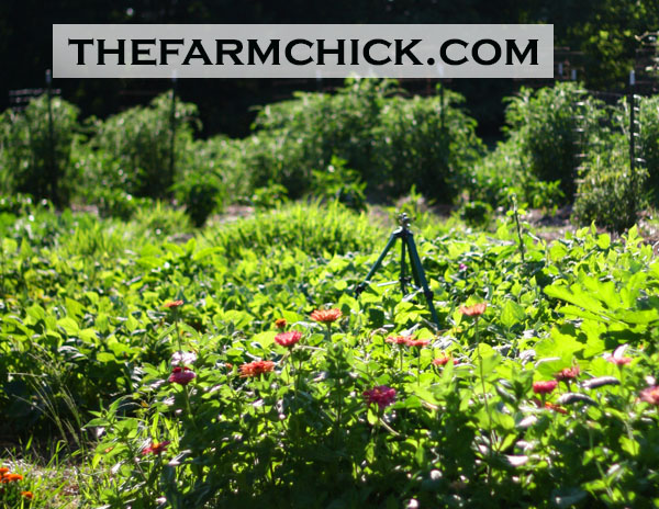 Plant flowers in your vegetable garden! #garden #flowers #vegetablegardening #homestead