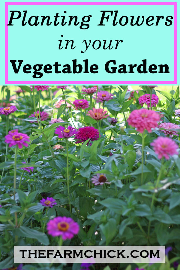 You need to plant flowers in your vegetable garden! #flowers #vegetablegarden #garden #beginninggardener #homesteading