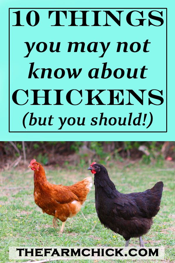 Learn some surprising facts about chickens! #chickens #homesteading #farm #poultry