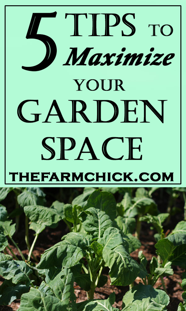 Learn 5 tips to maximize your garden space! #garden #gardening #homesteading #sustainableliving