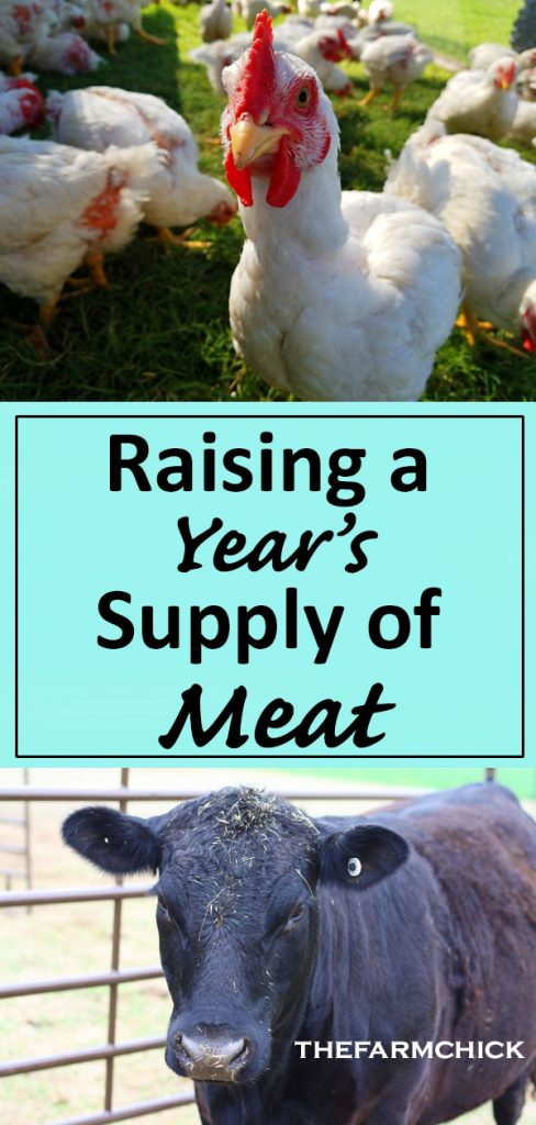 Ready to raise your own meat? Read this to jumpstart you on your journey to raising a year's supply of meat! #homesteading #raisingmeat