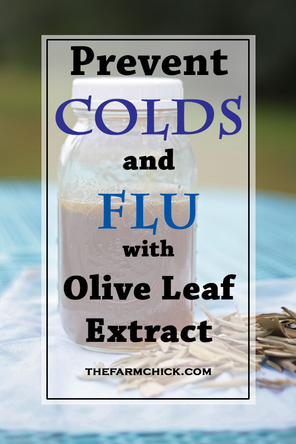 Fight illness with an olive leaf tincture! Learn to make your own!