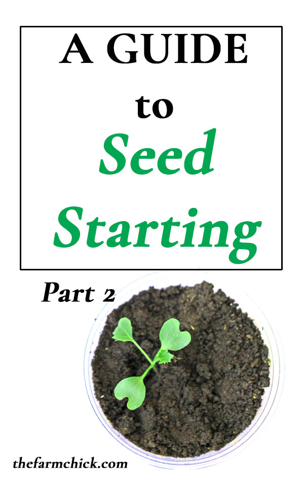 Learn all about what to do AFTER your seedlings emerge! #gardening #seedlings #seedstarting