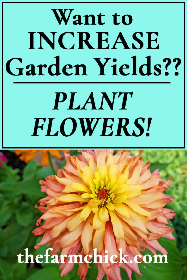 Increase your garden yields by planting flowers!