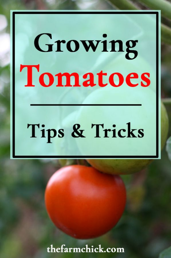 Get all my tips and tricks for growing tomatoes successfully!  #tomatoes #gardening #homesteading  #vegetablegardening